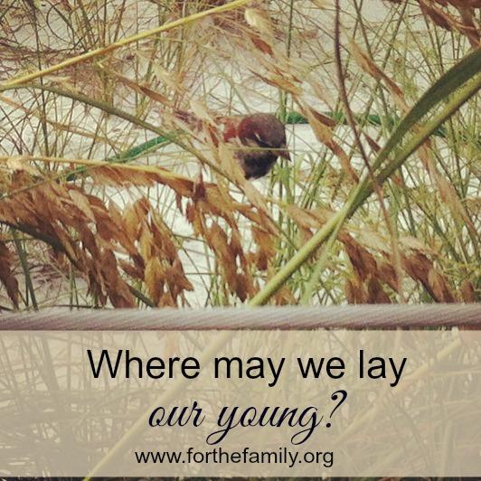 wheremaywelayouryoung