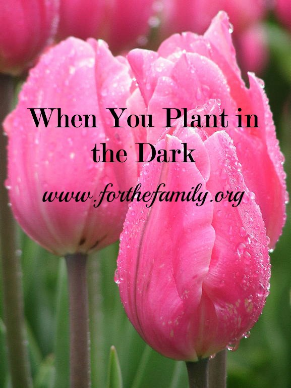 When You Plant in the Dark